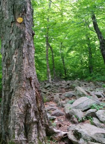 Trail to Giant's Ledge