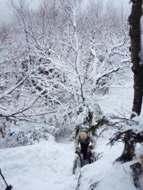 aaron climbing slide