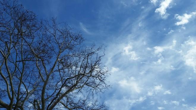 plane tree sky