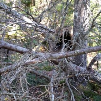 bushwack obstacle